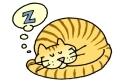 026-cat-sleeping-02